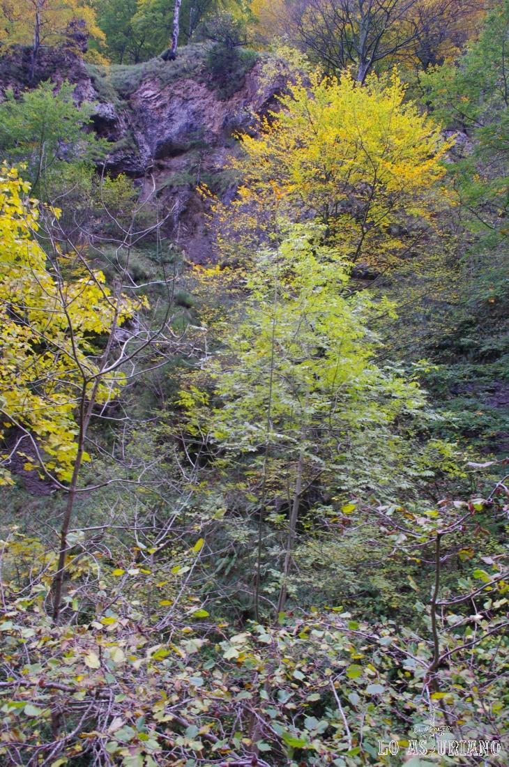 Los árboles crecen en los más inaccesibles peñascos.