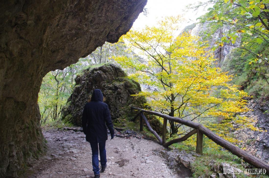 La incomparable ruta del Alba, en la parte baja del Parque Natural de Redes.
