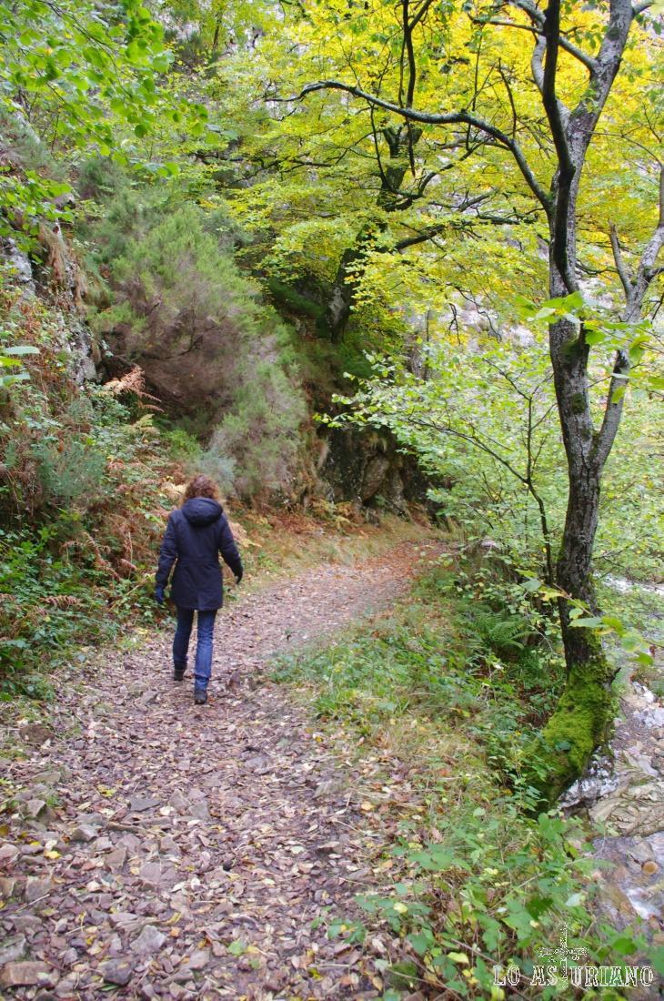 Caminamos en un precioso manto de ojas.