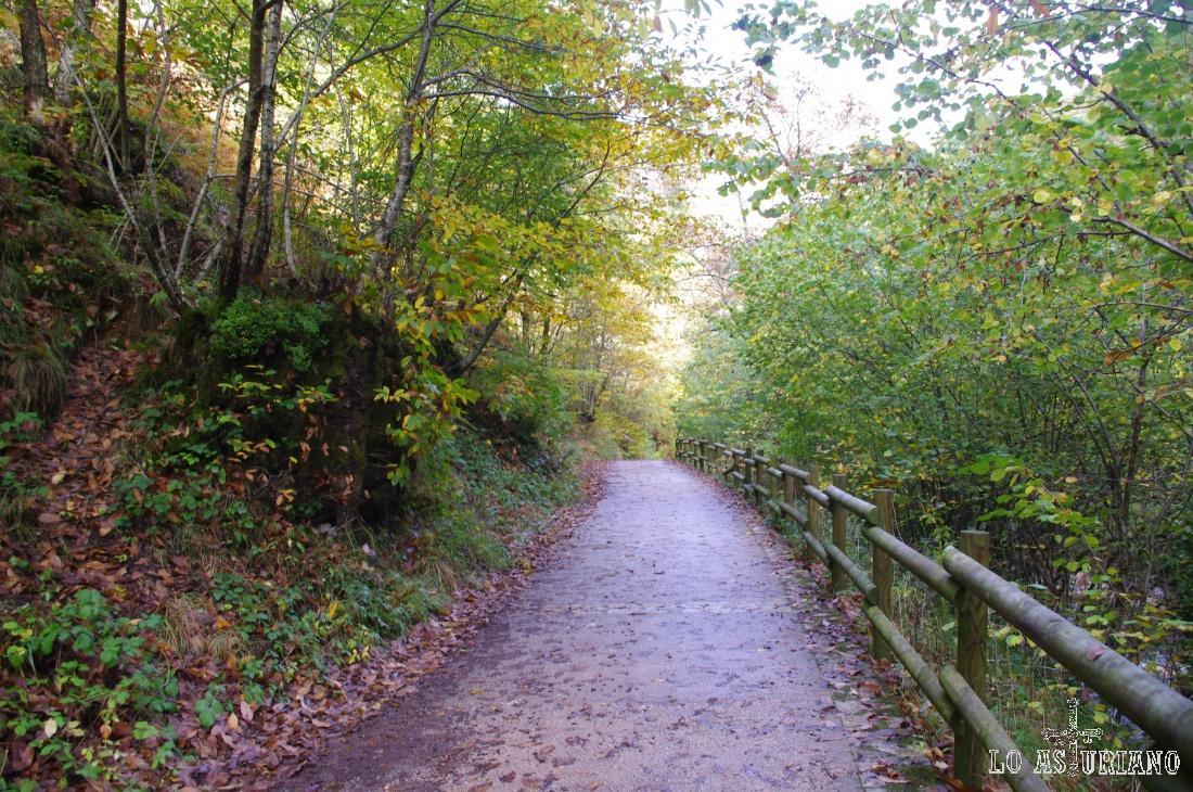 Verdes, rojizos y amarillos en el otoño del Alba.