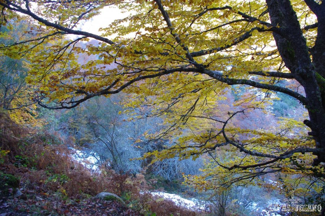 Parte alta del río Monasterio.
