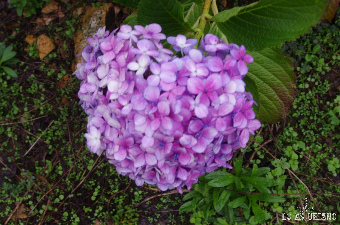 Flor en Somao.