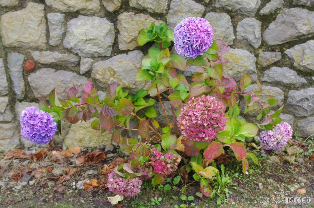 Flores en un jardín de Somao.