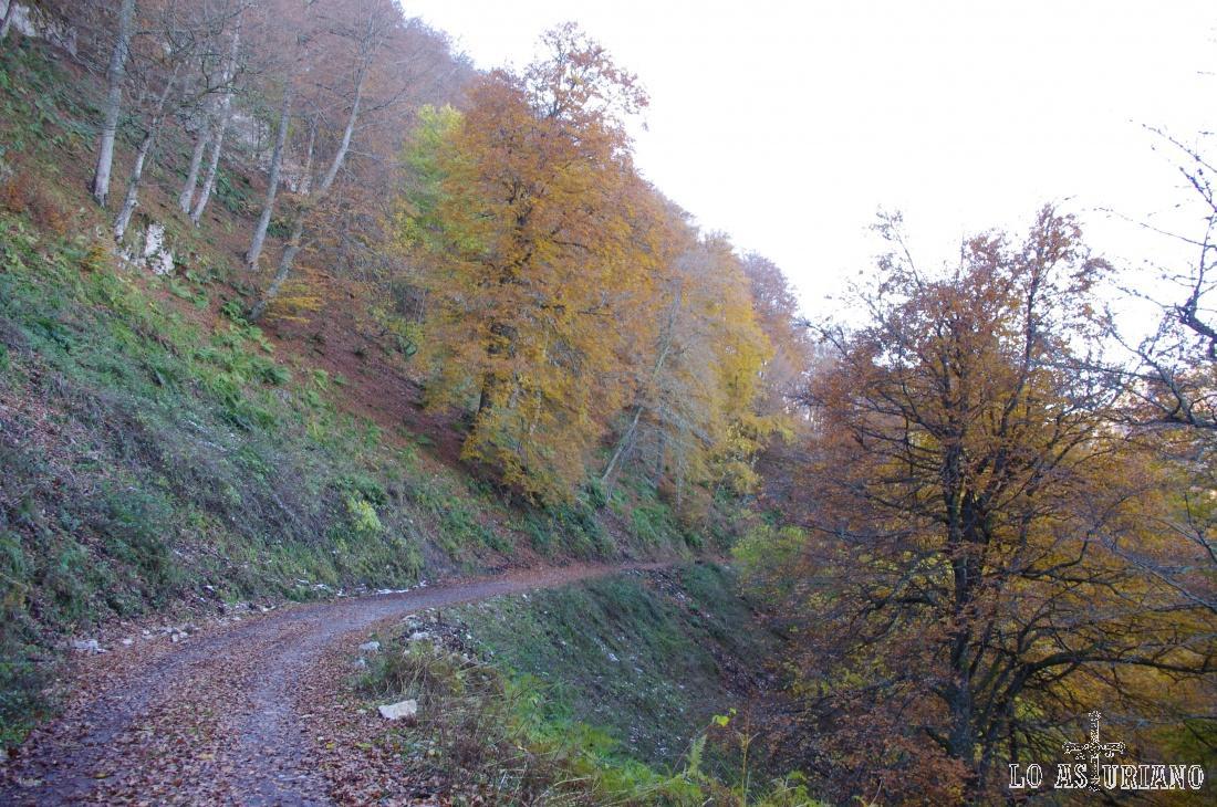 La zona baja del valle del Monasterio tiene una buena masa boscosa de hayas jóvenes, mezcladas con otras especies, mientras que la parte alta tiene hayas maduras, que se apoderan de las laderas y no dejan crecer otros árboles.