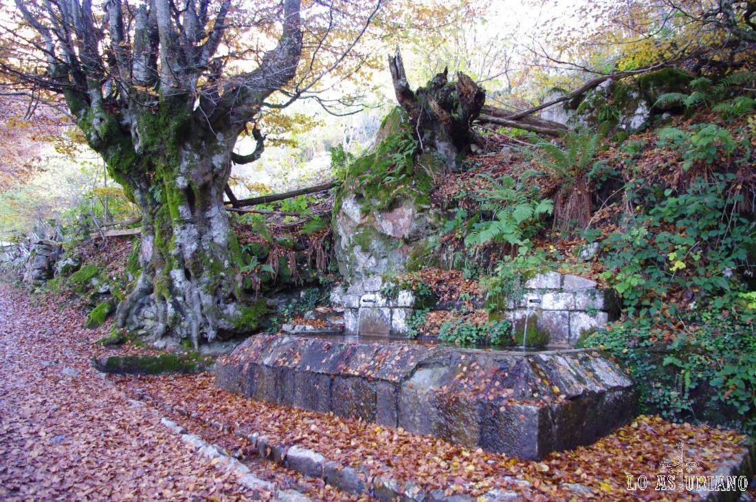 Fuente de Andorvíu, en la subida a Brañagallones, Redes.