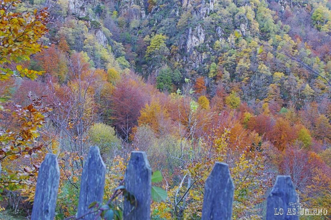 El bosque pardo de Redes en otoño.