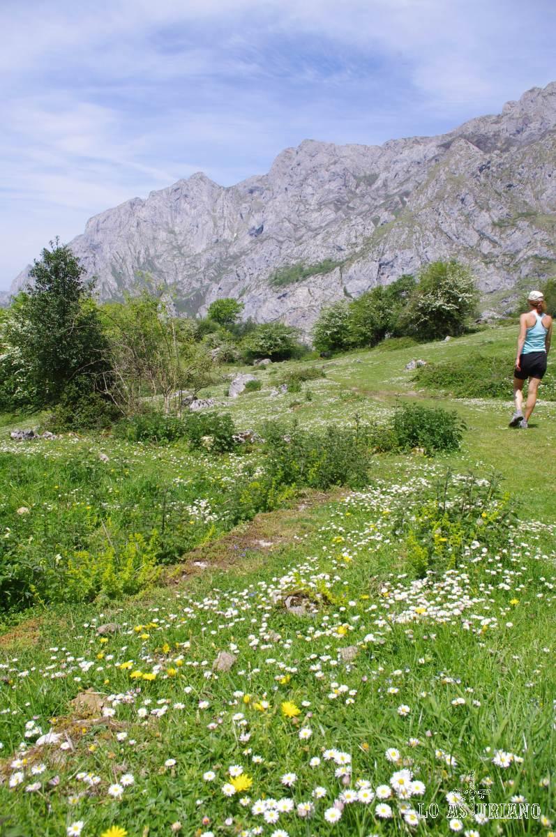 Que preciosa estaba la primavera en el valle de Angón, en este extraordinario concello de Amieva!... Para muestra un botón... y miles de flores!...