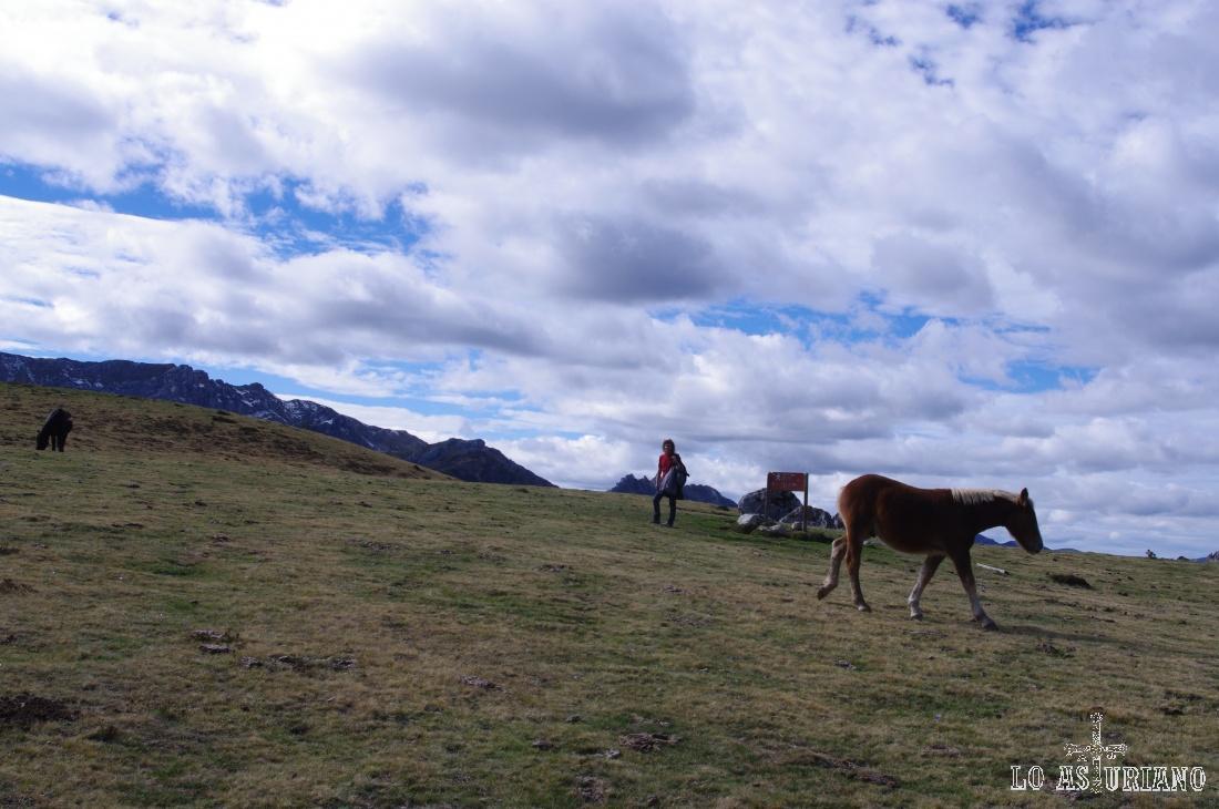 Caballos viviendo casi salvajes en las cumbres somedanas.