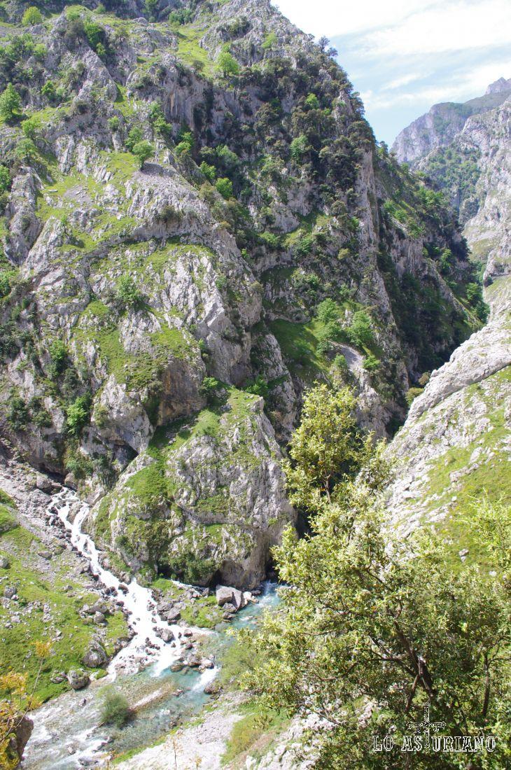 En esta zona el Canal de la Raiz y el de la Ría, vierten sus limpias aguas al Cares.