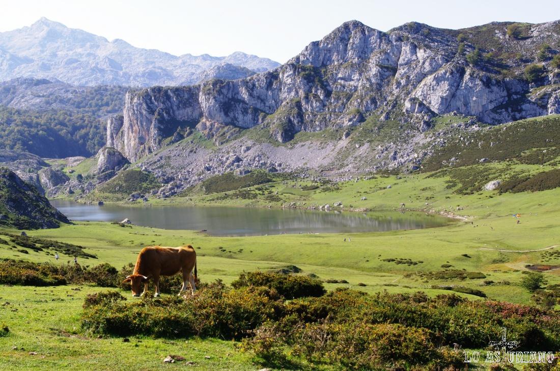 El pico el Mosquital, 1287 m, a la derecha, que es el que separa este precioso lago de la Ercina, del lago de Enol, que está detrás.