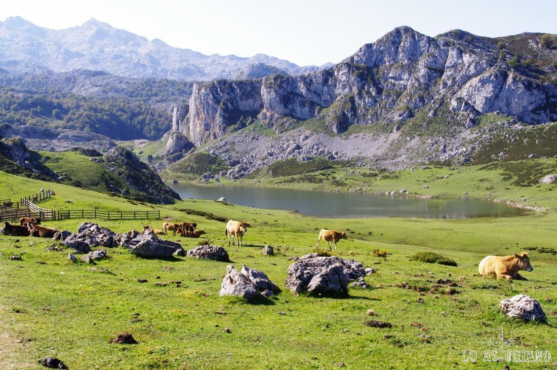 El lago de la Ercina, con la picota de Enol a su derecha.