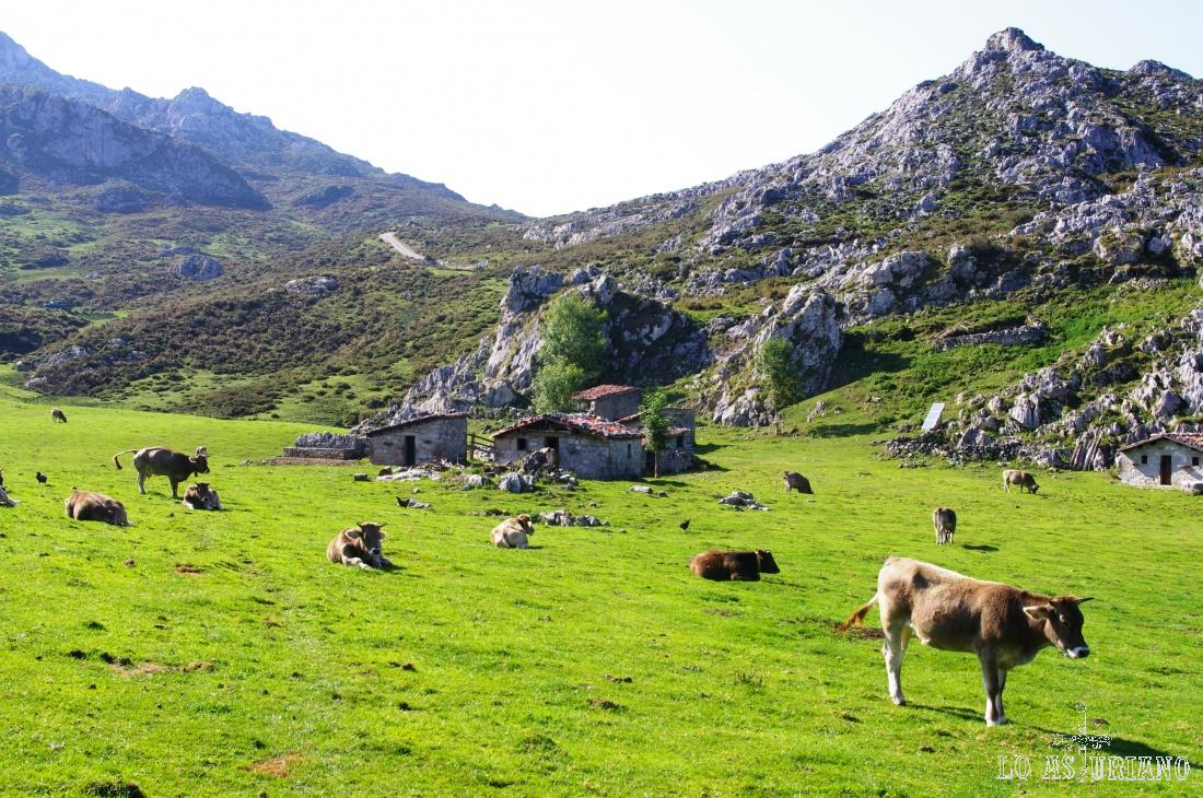 La preciosa majada de Belbín, a 1 hora de los lagos de Covadonga.