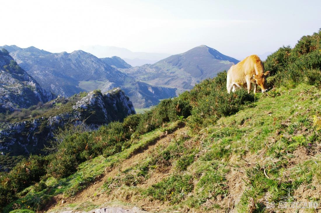 Preciosa estampa de lo más asturiana.