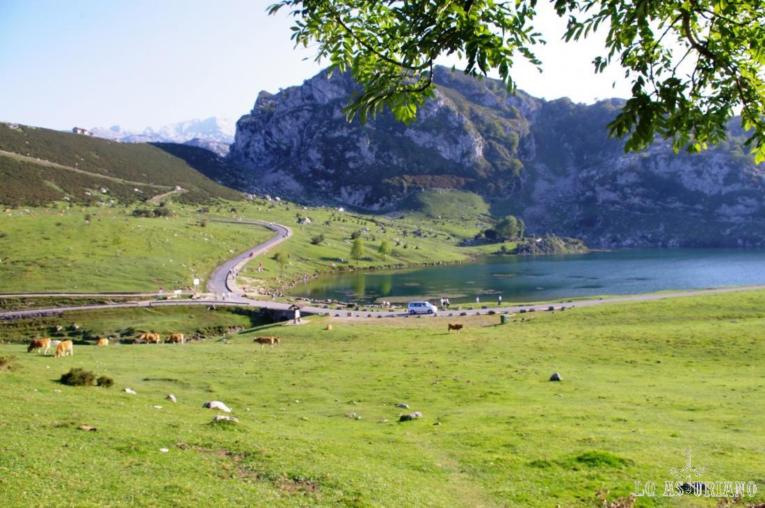 El precioso lago de Enol, uno de los 2 lagos de Covadonga.