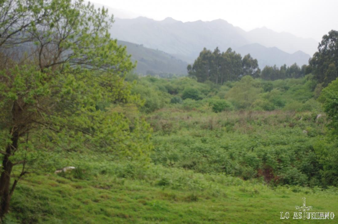 El invierno y la primavera del 2013 fueron tan lluviosas, que el verde en el concejo de Llanes era extraordinario.