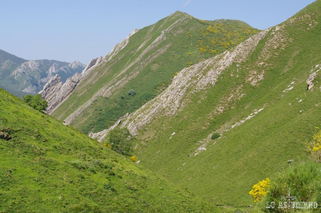 Vamos tomando altura, y el amarillo de las escobas será a partir de ahora la que alegrará el paisaje somedano.