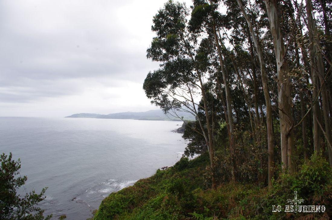 Me encantan estos acantilados poblados de esbeltos eucaliptos! Sabes que este árbol tiene propiedades desinfectantes y estimulantes?...