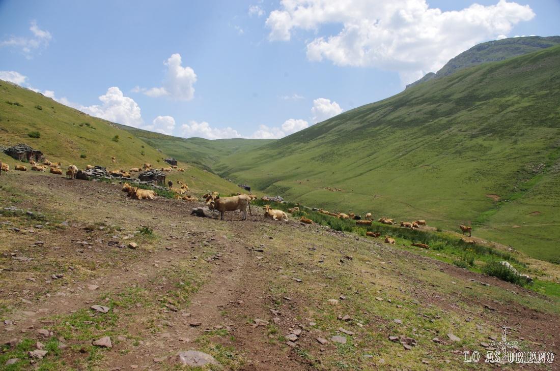 Braña estival de la Mesa, en el límite entre Asturias y León, y en pleno Camín Real de la Mesa.