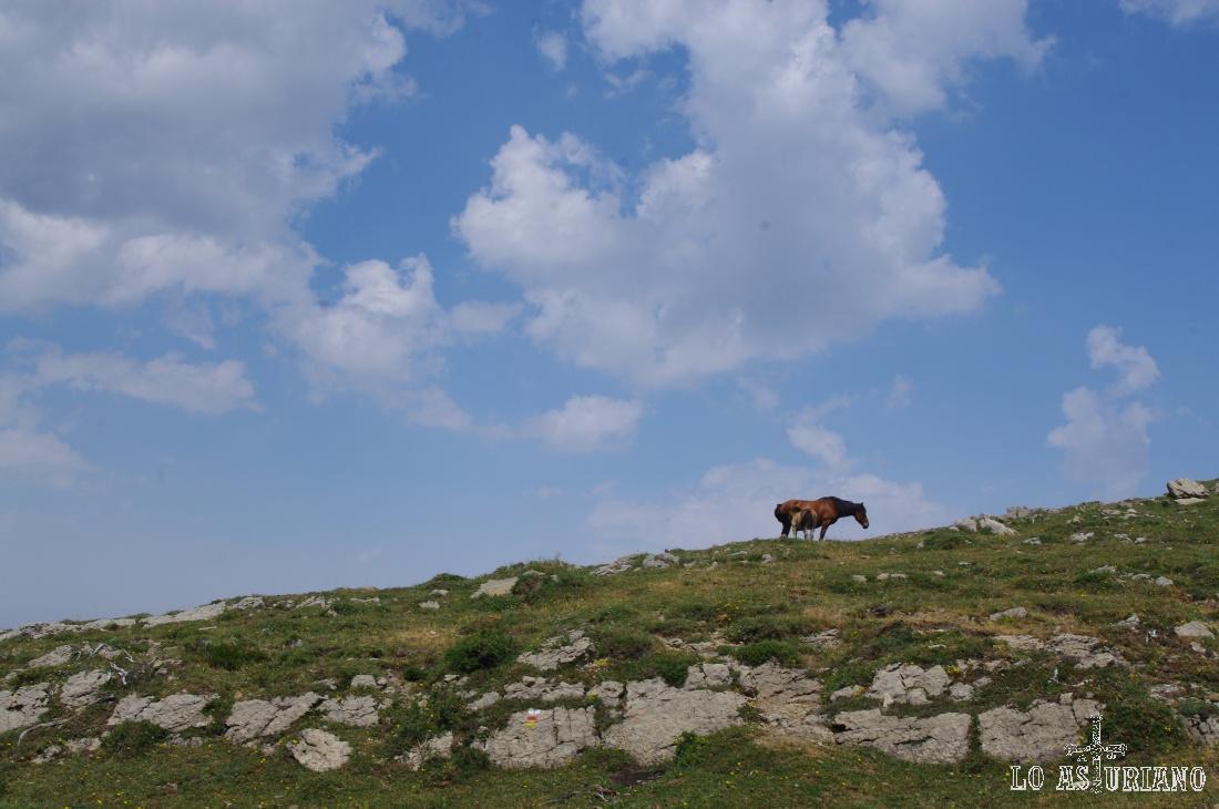 Yegüa y potrillo en el cordal de la Mesa.