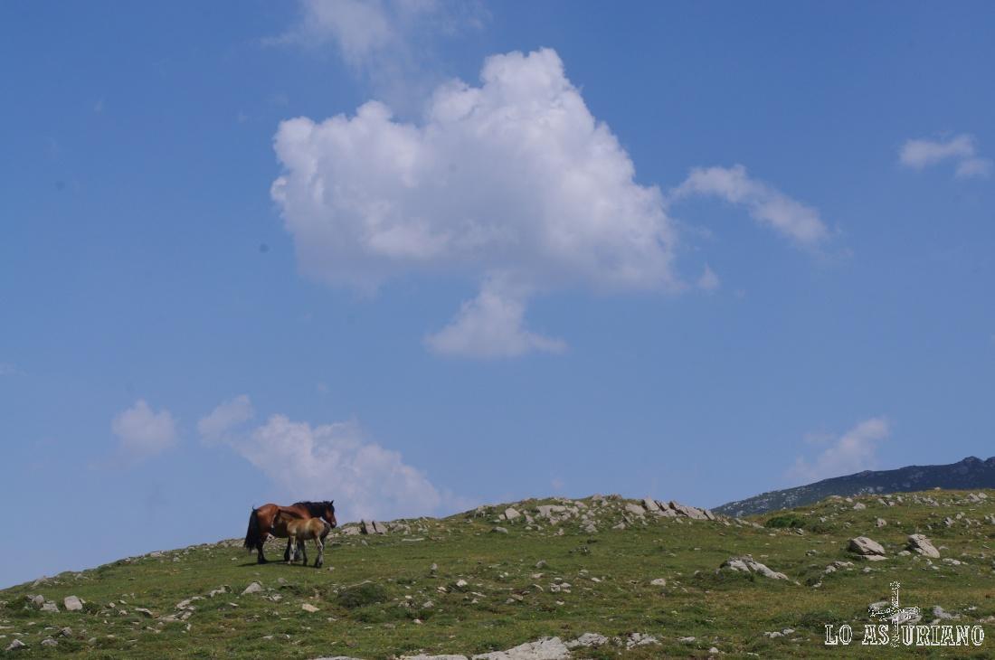 Yegüa con su potrillo en el cordal de la Mesa.