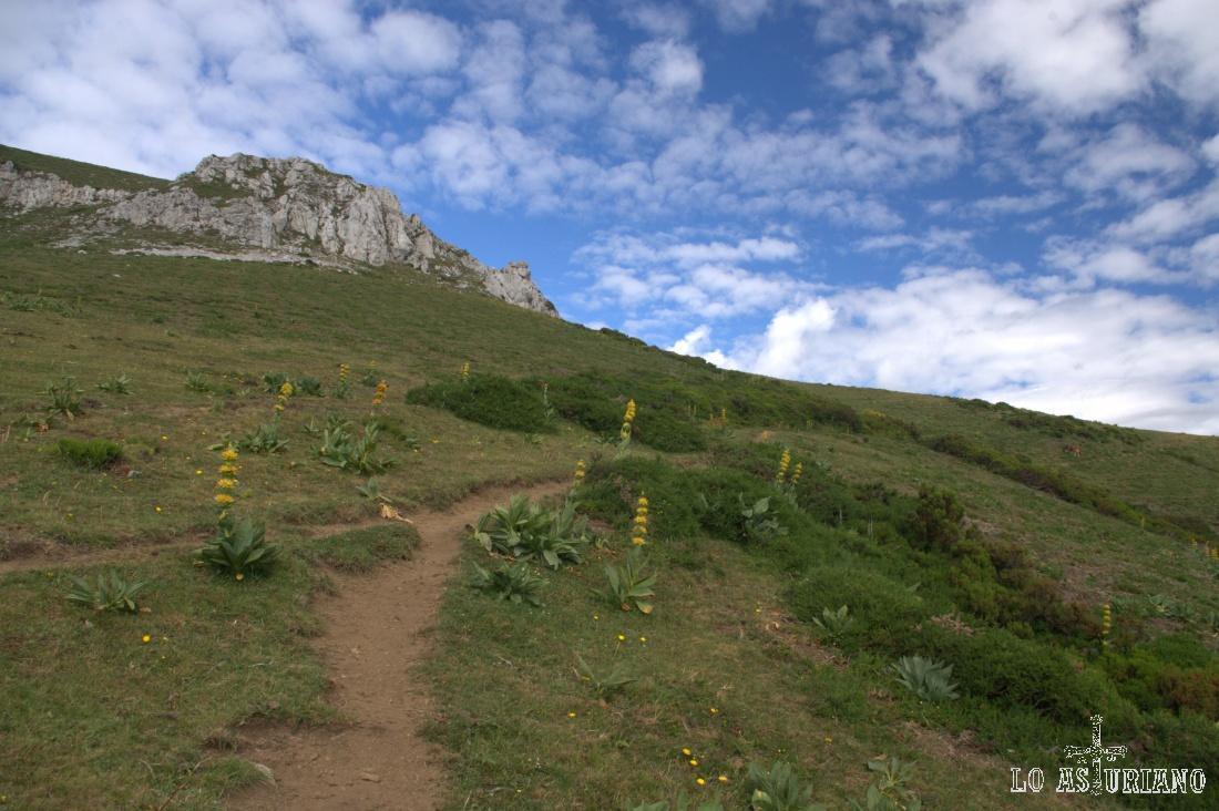 Pronto aparece esta sendita, que es la que nos lleva placenteramente hasta encarar la subida al Ferreirúa.