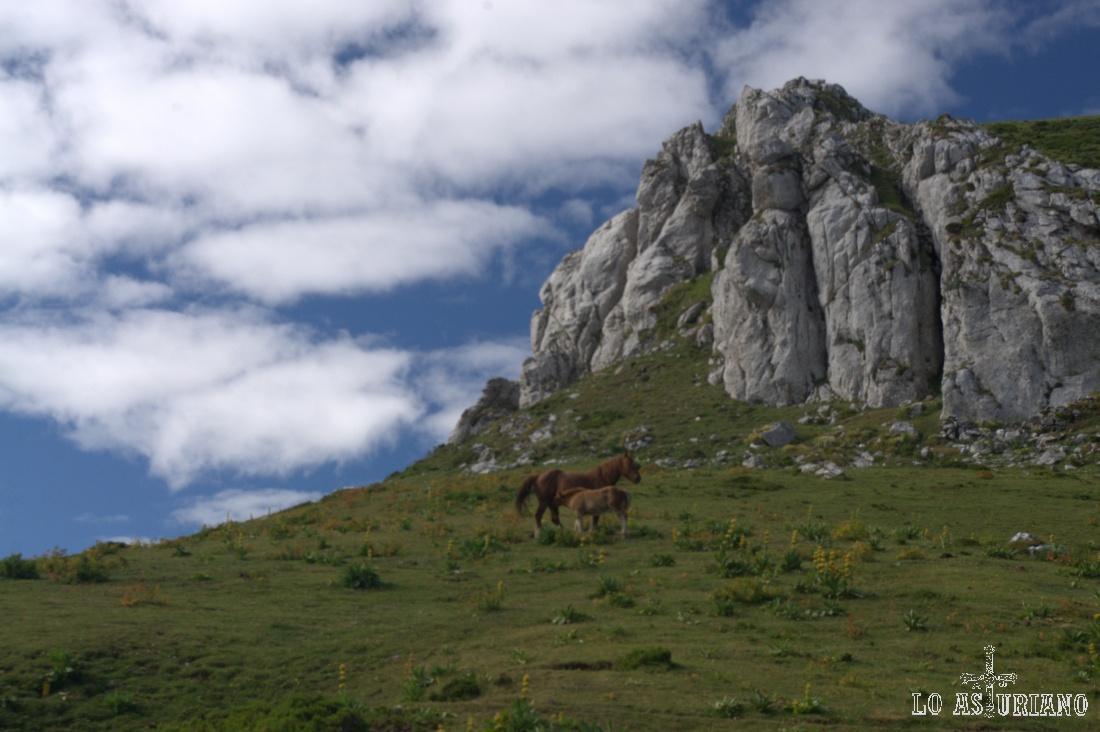 Yegüa y potrillo en los pastos del Alto de la Ventana, lindando ya con la provincia de León.