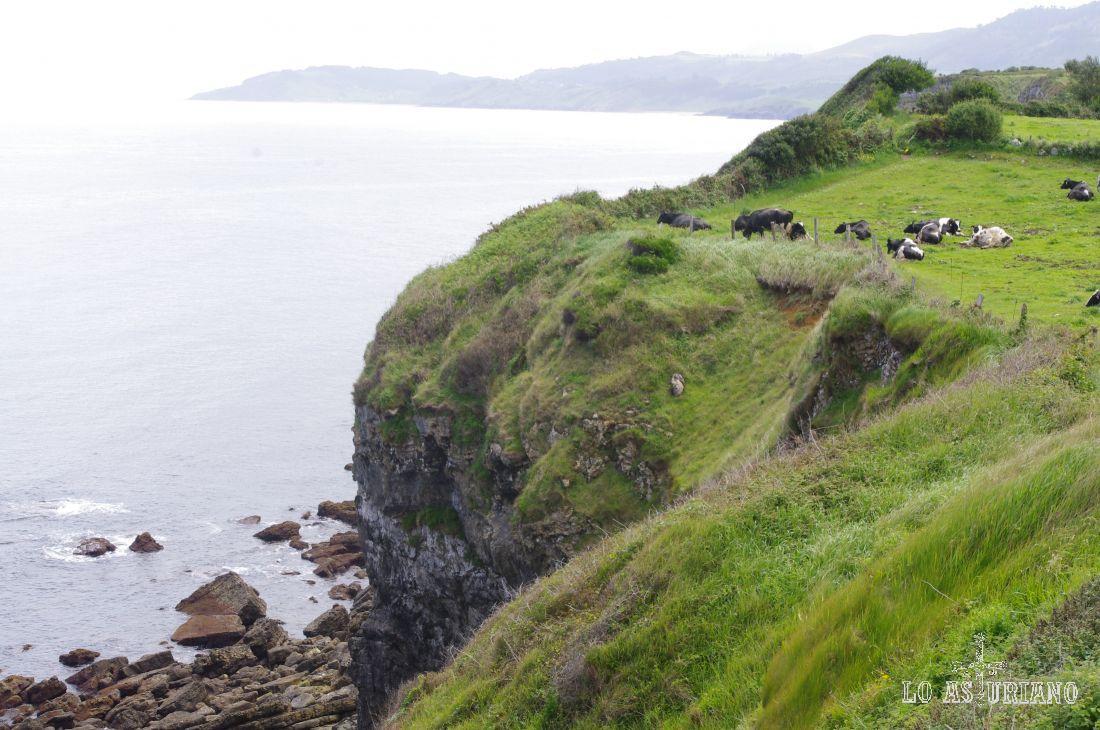 Vacas afortunadísimas, con las mejores vistas al mar.