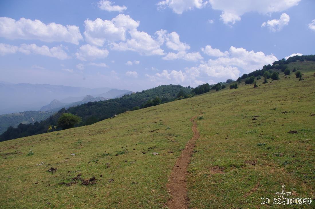 Este hilillo es nuestra senda, que se dirige hacia la zona boscosa del fondo.