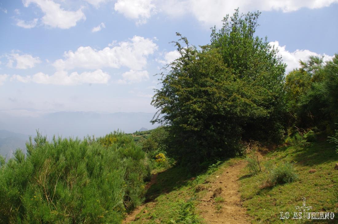 La sendita nos conduce hacia los arbustos.