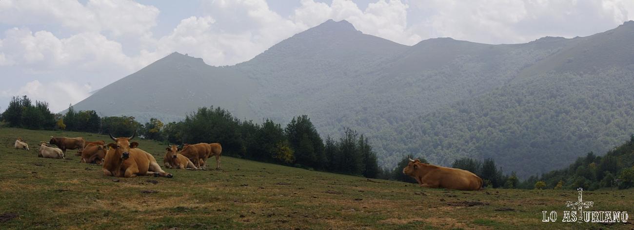 Picos de Somiedo