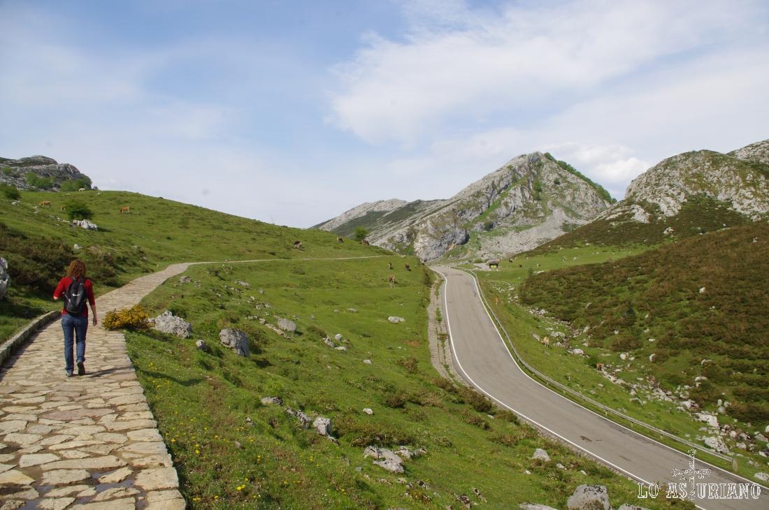 Paralelamente a la carretera, nuestro camino nos lleva en pocos minutos al primero de los lagos: Enol.