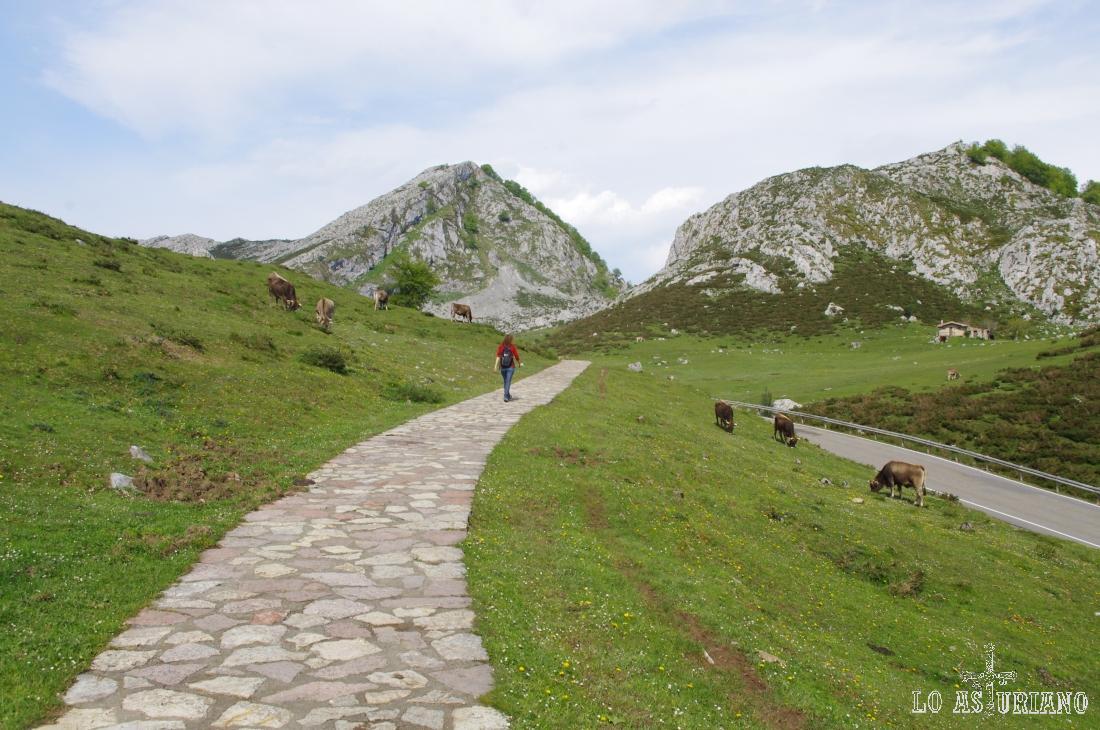 Camino del lago de Enol, en la precisa ruta de los Lagos de Covadonga. Al fondo, la Porra de Enol.
