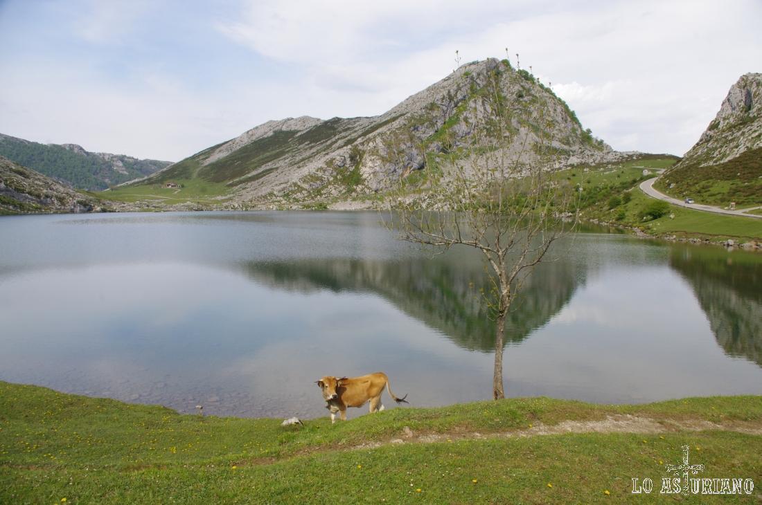 El precioso lago de Enol, con la Porra de Enol y la Vega de Enol al fondo.