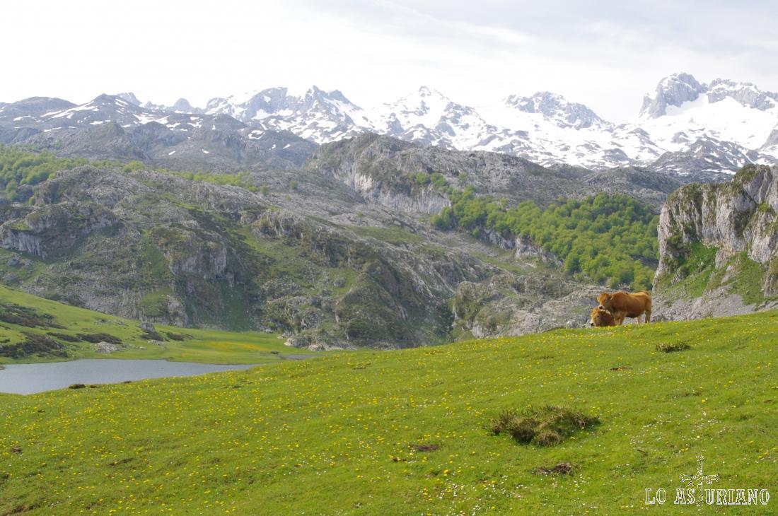 El precioso lago de la Ercina, en pleno mes de junio.