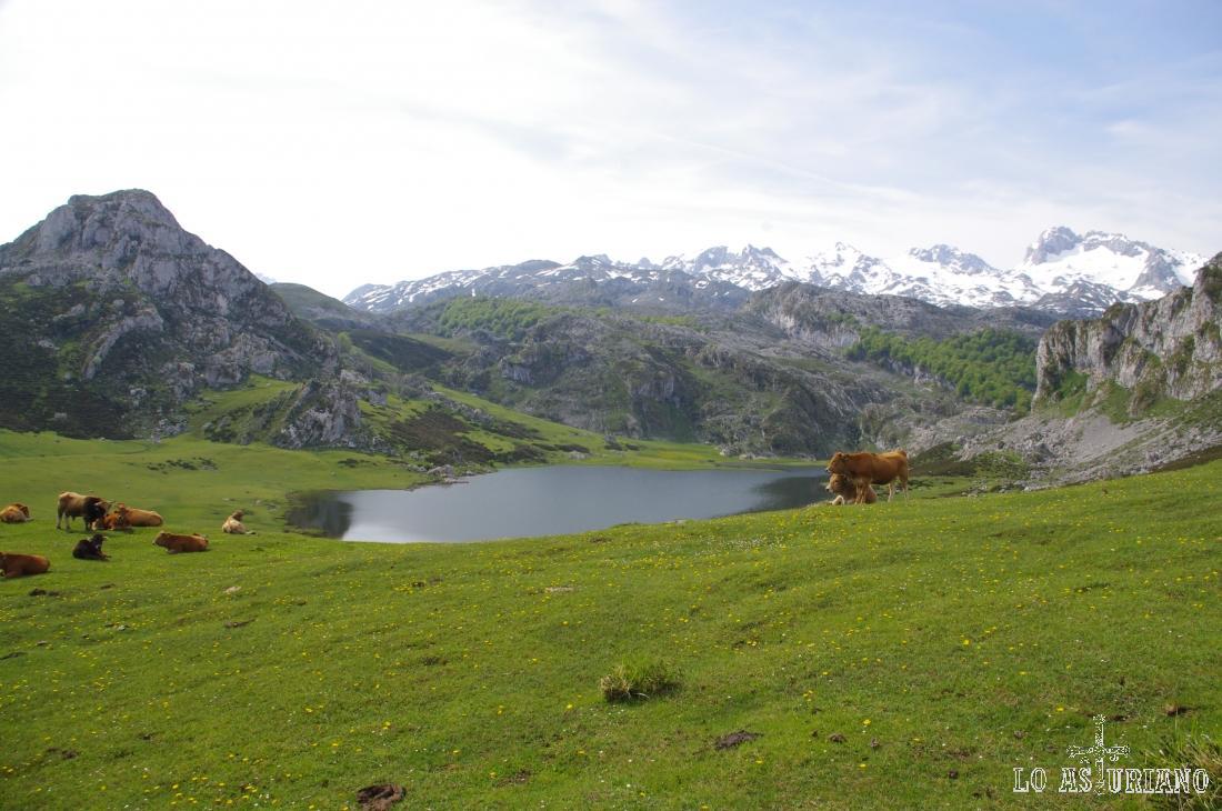 El lago de la Ercina, a 1108 metros, es el segundo de los lagos de Covadonga.
