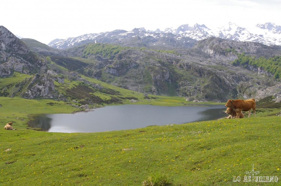 Bajando hacia el parking y restaurante que hay al lado de este lago de la Ercina.