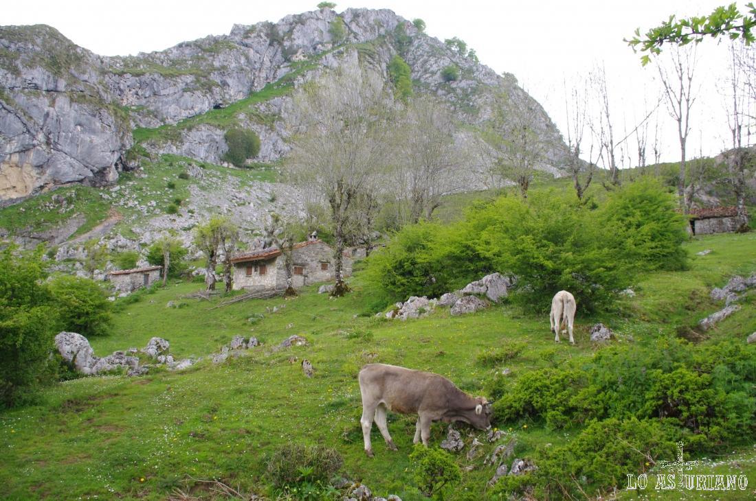La majada de Veleros tiene apenas 5 o 6 casetas pastoriles y está encaramada entre el lago de Enol y la carretera de acceso a los lagos.