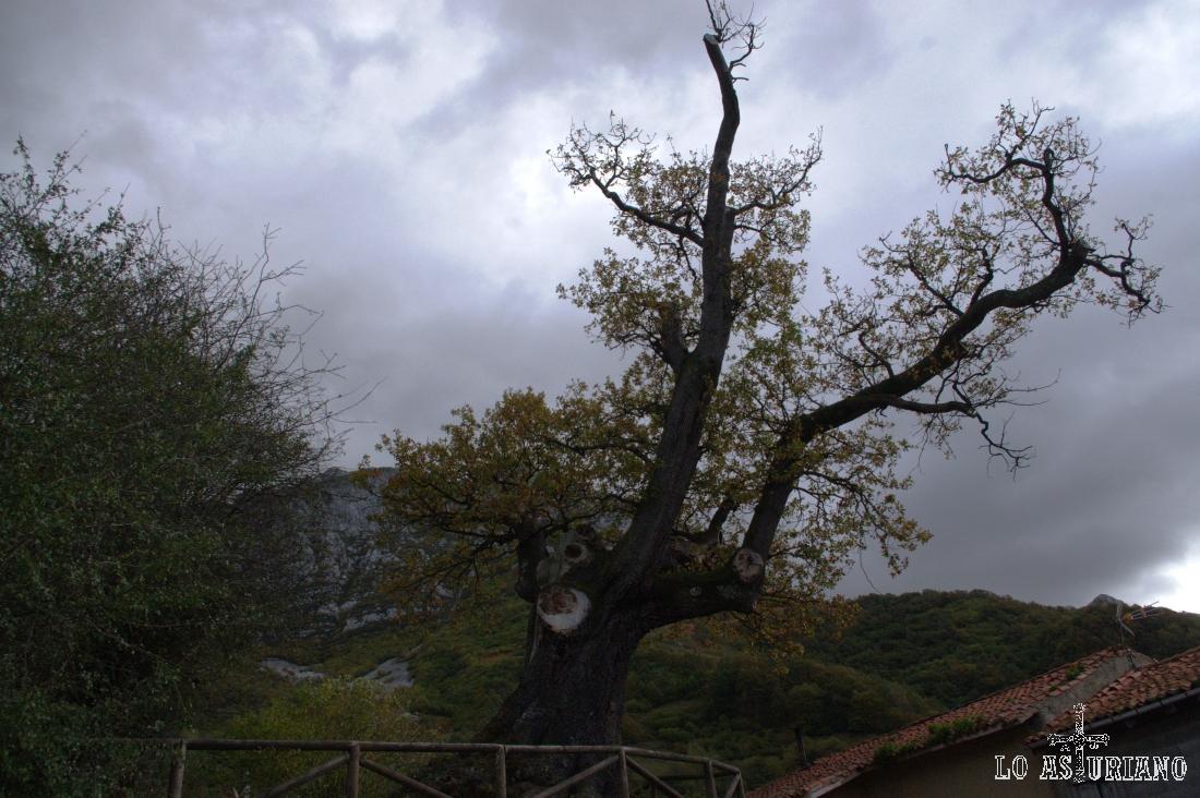 El rebollo de Bermiego es un Monumento Natural centenario, situado junto a la capilla de San Antonio.