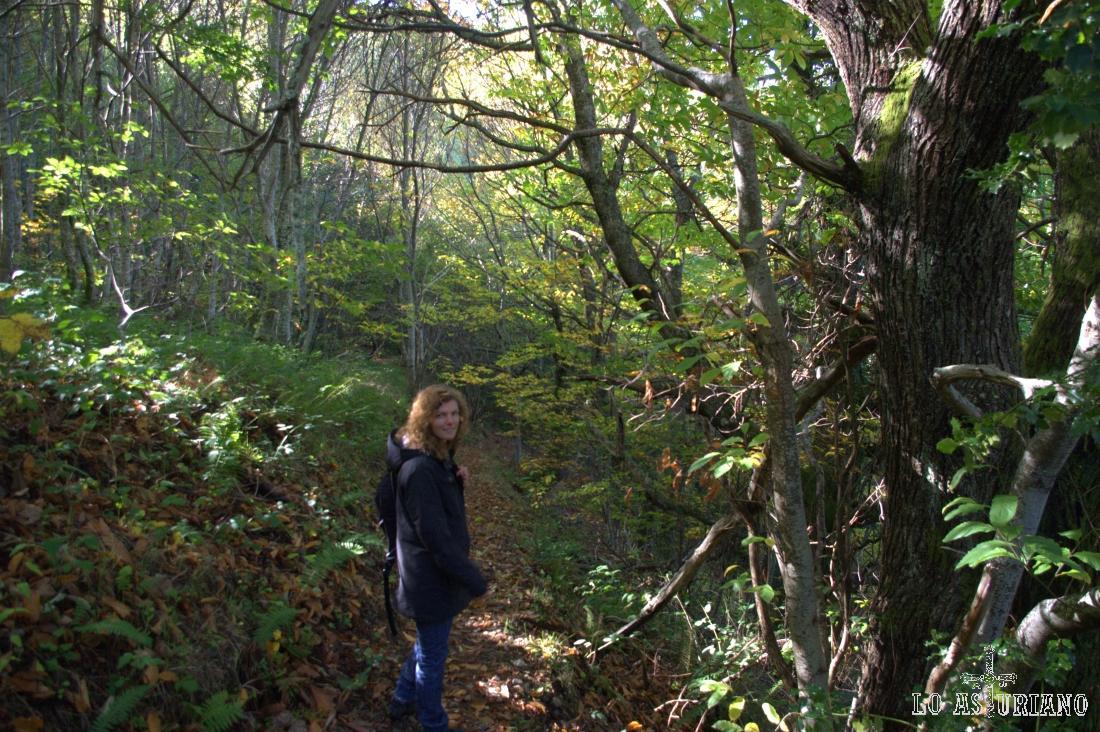Apenas entra la luz de este soleado día en el frondoso bosque de Posadoiro. Maravilloso!