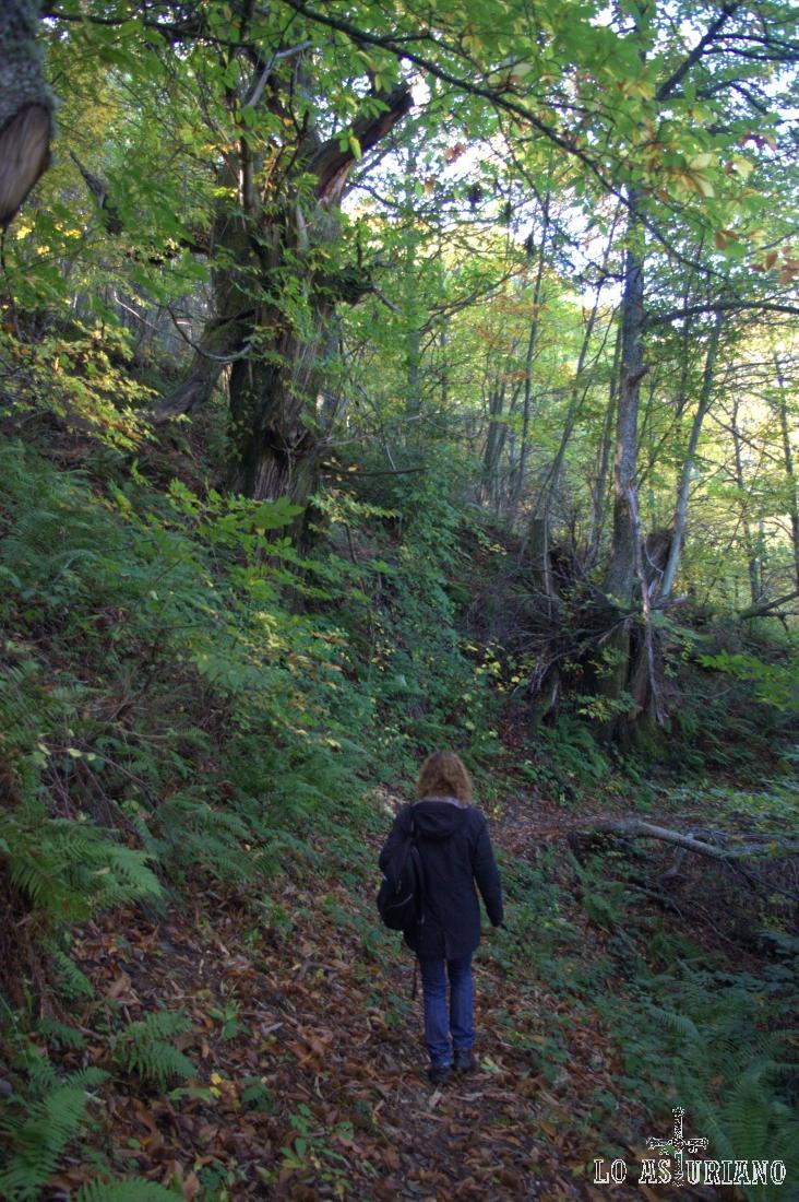La senda, estrecha y llena de hojas secas, zig-zagea descendiendo hacia el puente.