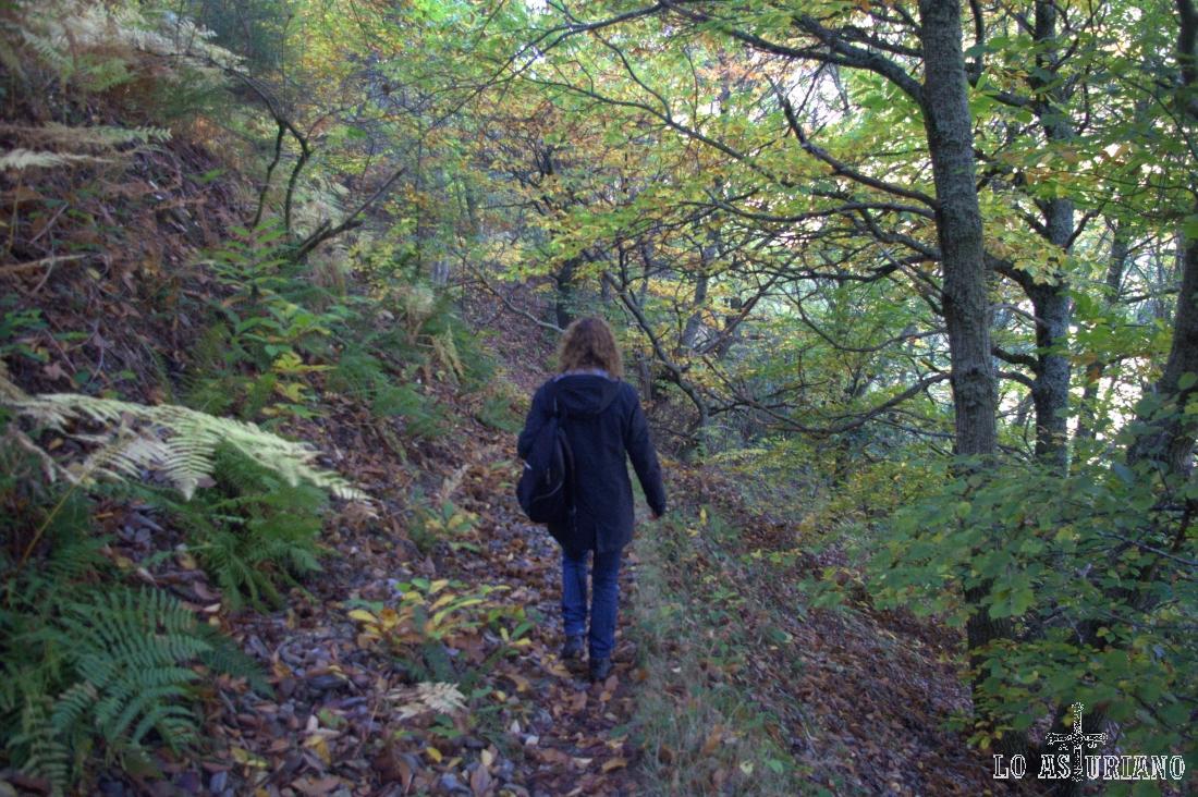 Descenso por el bosque Posadoiro hacia el puente sobre el río Ibias.