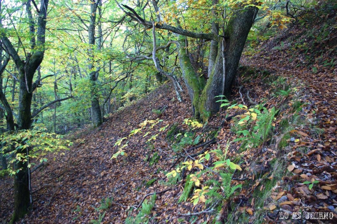 Curva en la senda, que a veces se difumina con la capa de hojas.