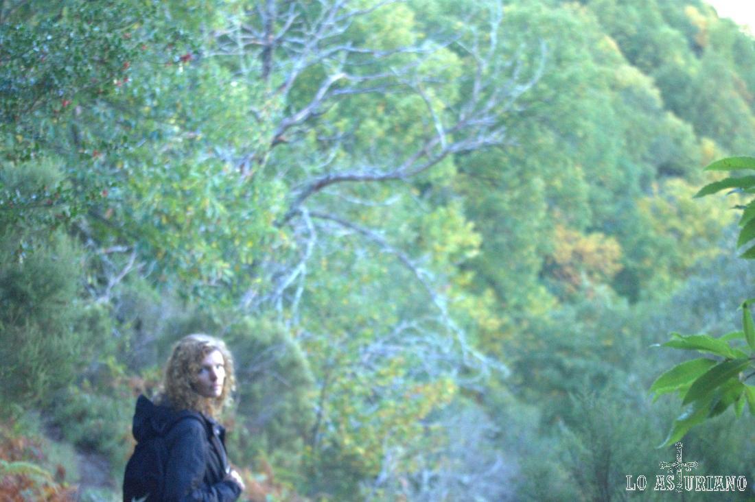 Colorido en el bosque Posadoiro.