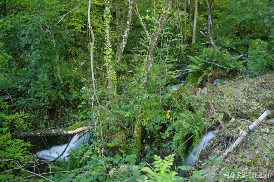 El reguero Calecho, del que estamos disfrutando en esta ruta, nace en la loma del Reguerón, 250 metros en desnivel más arriba.