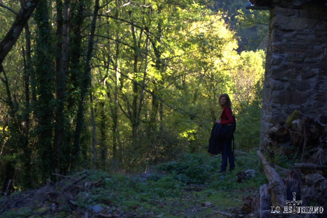 Senda entre los bosques en El Corralín, Degaña.