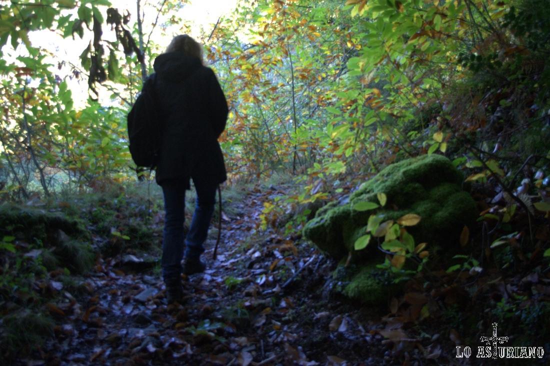 Este bosque está asentado entre las laderas del Serio y del Foradoiru.