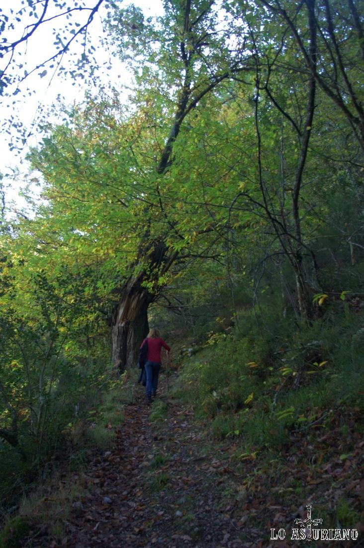 Cruzando el bosque.