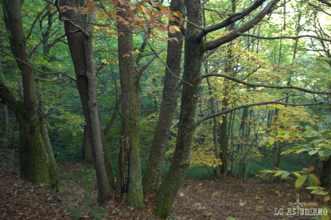 Ultimos árboles de nuestra senda en el Posadoiro.
