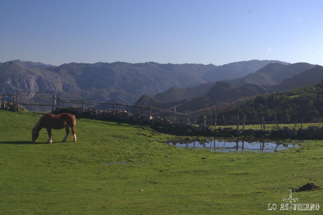 caballo en los praus de San Lorenzo