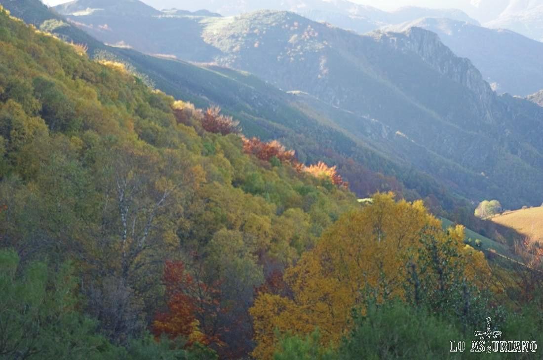 El bosque está empezando a tomar los colores pardos, rojizos y amarillos del otoño.